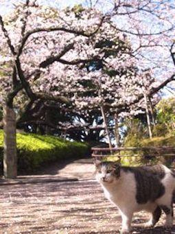 m_454saku-3-f38d1.jpg