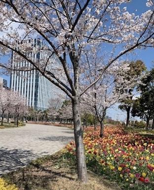 m_daiba.jpg