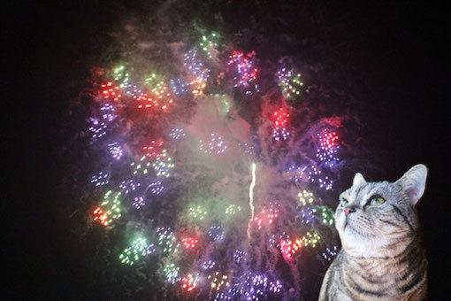 sumomo365_201808_fireworks_00.jpg