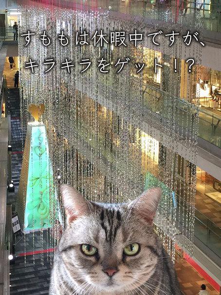 sumomo365_201812_Shimmer_00.jpg
